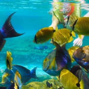 krabi nice sea snorkeling, krabi nice sea