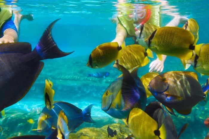 Krabi Nice Sea Snorkeling Tour