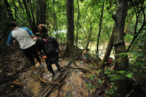 2 days 1 night khao sok jungle, elephant trekking tour, khao sok jungle trekking, tour from krabi