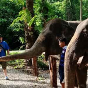 krabi elephant heaven sanctuary park, elephant sanctuary