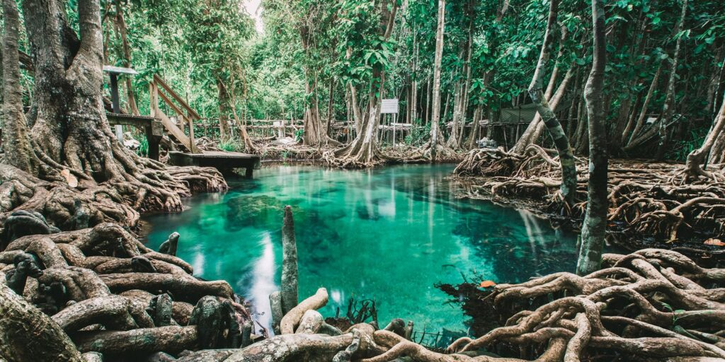 many best places in krabi, emerald pool krabi, hot spring waterfall krabi, nong thale krabi, tiger cave temple krabi, phi hua to cave krabi, khao karos krabi many best places in krabi Many best places in Krabi are not only the sea Tha Pom Khlong Song Nam 16 1 1024x512