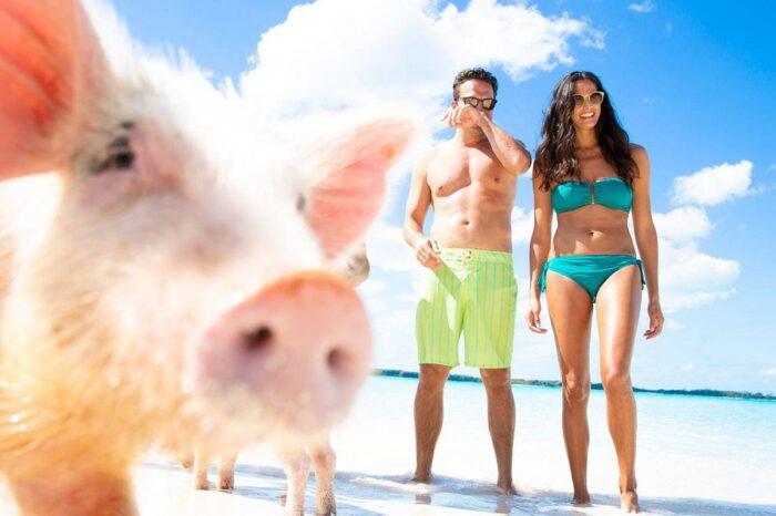 Pig Feeding, Kayaking, Snorkeling Trip at Pig Island From Koh Samui