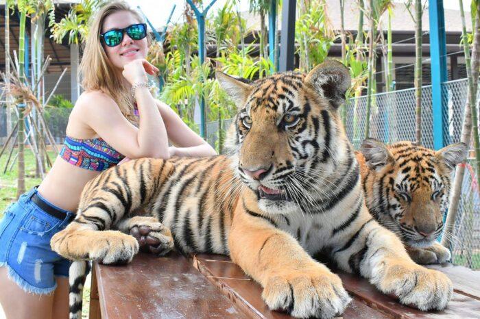 Tiger Park Phuket Ticket