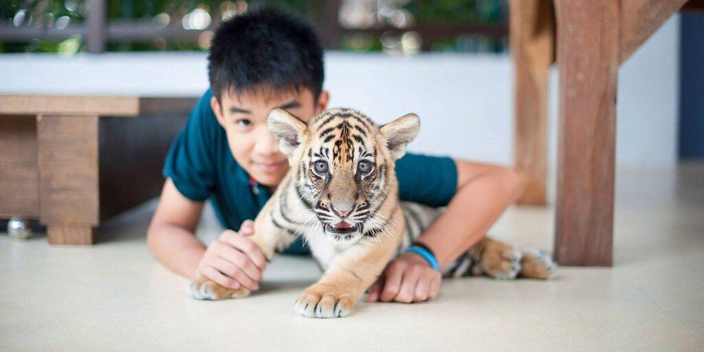 samui aquarium and tiger zoo, koh samui, samui tiger zoo samui aquarium and tiger zoo Samui Aquarium And Tiger Zoo in Koh Samui – Admission Ticket Samui Aquarium And Tiger Zoo in Koh Samui Admission Ticket 1024x512