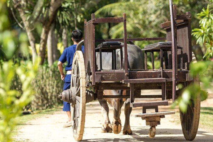 Phuket Local Life Culture Tour