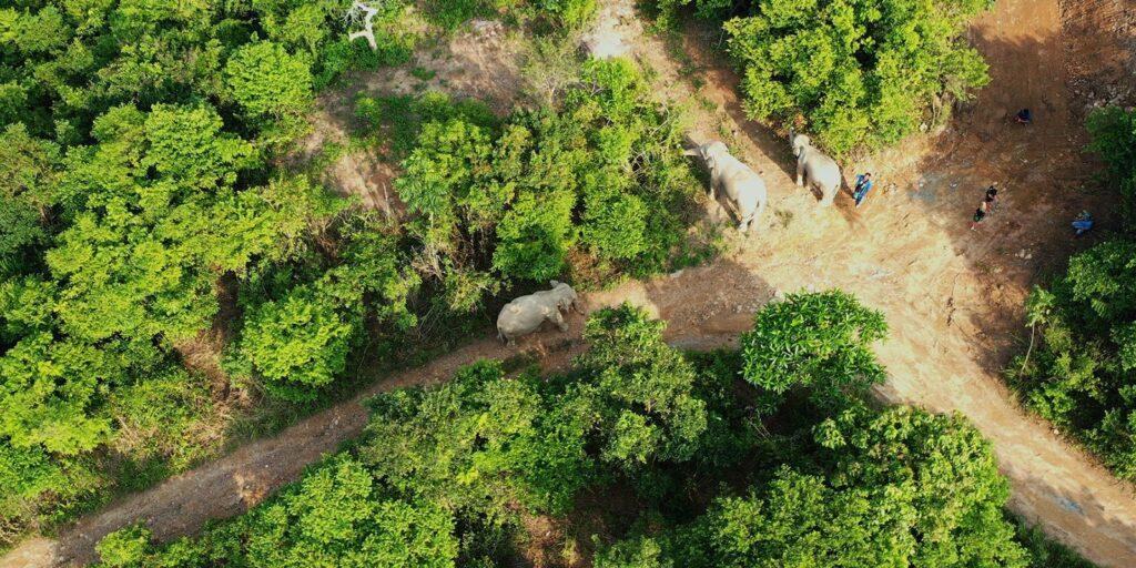 samui elephant haven, ethical elephant samui elephant haven Ethical Elephant Experience at Samui Elephant Haven Ethical Elephant Experience at Samui Elephant Haven 1024x512
