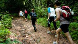 2 days 1 night khao sok jungle 2 Days 1 Night Khao Sok Jungle with Elephant Sanctuary Tour from Krabi 1121910652