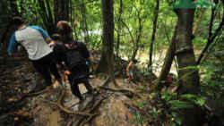 2 days 1 night khao sok jungle 2 Days 1 Night Khao Sok Jungle with Elephant Sanctuary Tour from Krabi 502505972