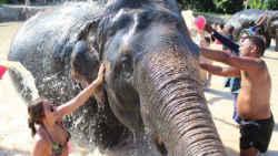 2 days 1 night khao sok jungle 2 Days 1 Night Khao Sok Jungle with Elephant Sanctuary Tour from Krabi 2164140755